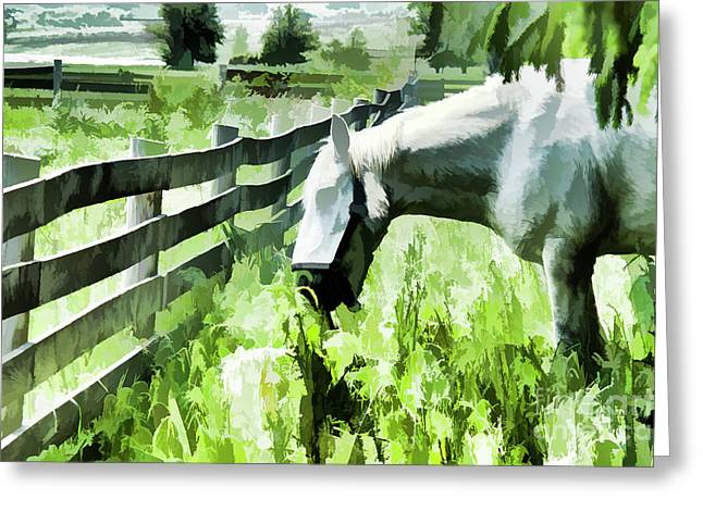 Iowa Farm Pasture And White Horse Greeting Card by Wilma Birdwell