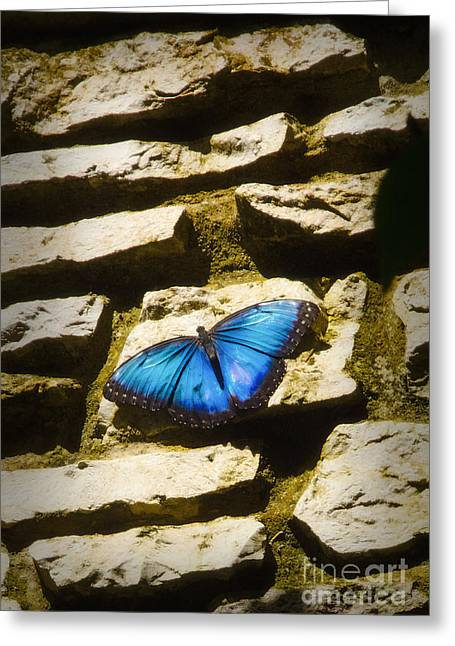 Iridescence-on-rocks Greeting Card