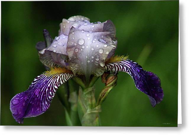 Iris After The Rain 1409 H_2 Greeting Card