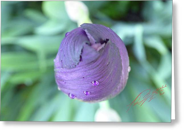 Iris After The Rain Vi Greeting Card