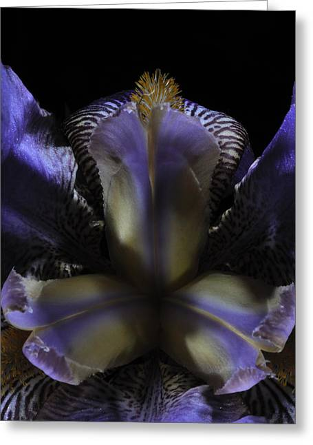 Iris Aglow Greeting Card by Mark Fuller
