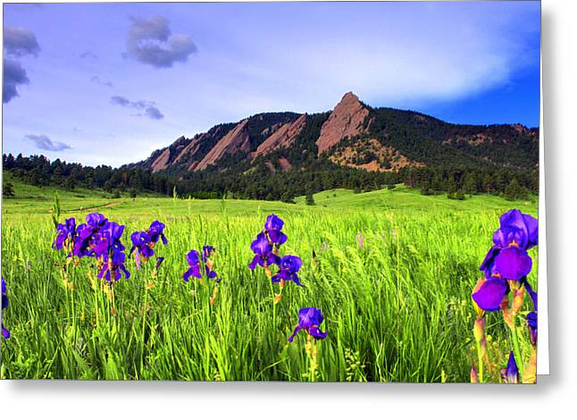 Iris And Flatirons Greeting Card