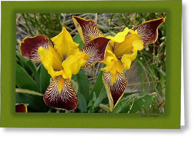 Iris As Birds Captured Greeting Card by Kae Cheatham