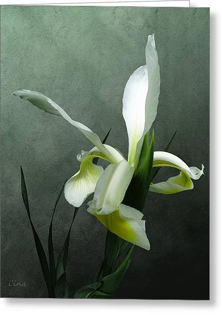 Iris Celebration Greeting Card