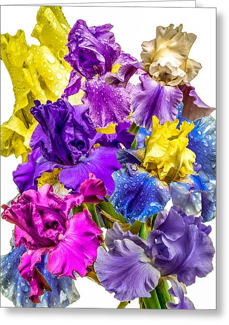 Greeting Card featuring the photograph Iris Collection by CAbbottPhotography