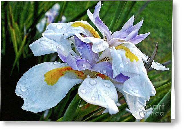 Iris Enjoying The Sunshine Greeting Card by Kaye Menner