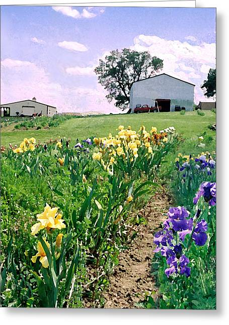 Greeting Card featuring the photograph Iris Farm by Steve Karol