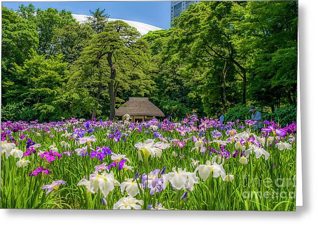 Iris Field In Mid Tokyo Greeting Card