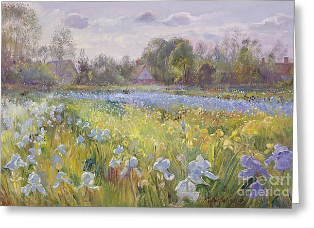 Iris Field In The Evening Light Greeting Card by Timothy Easton