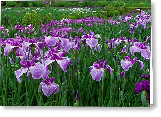 Iris Garden Nara Japan Greeting Card