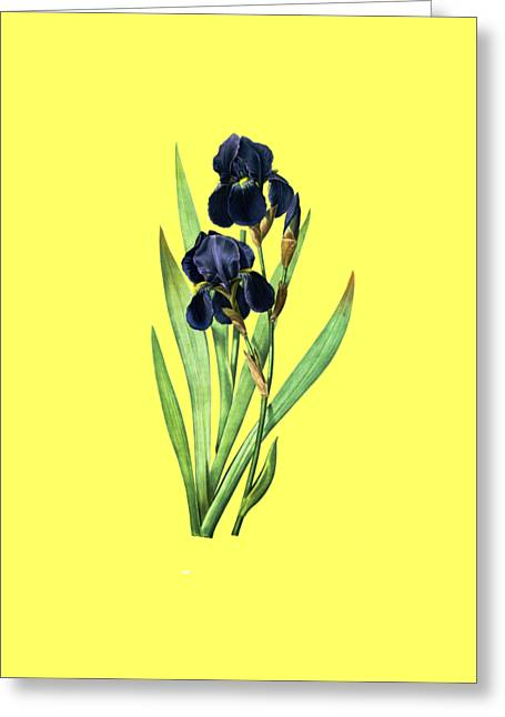 Iris Germanica Greeting Card
