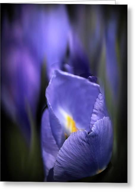Iris Glow Greeting Card by Jessica Jenney