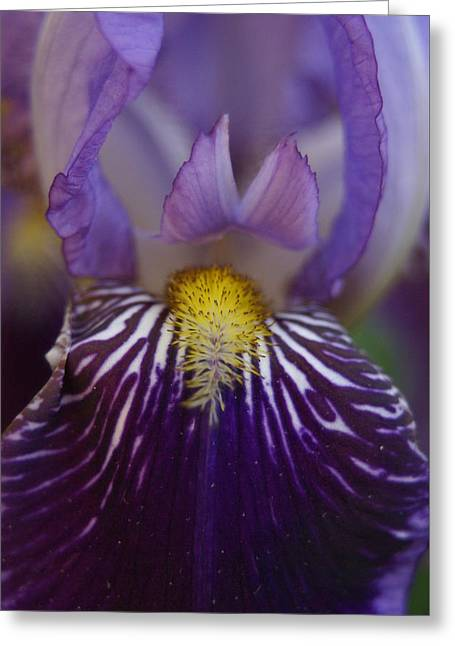 Greeting Card featuring the photograph Iris by Heidi Poulin