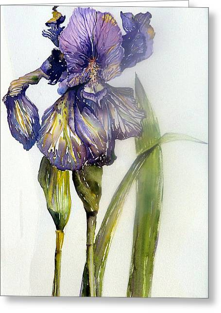 Iris In Bloom Greeting Card by Mindy Newman