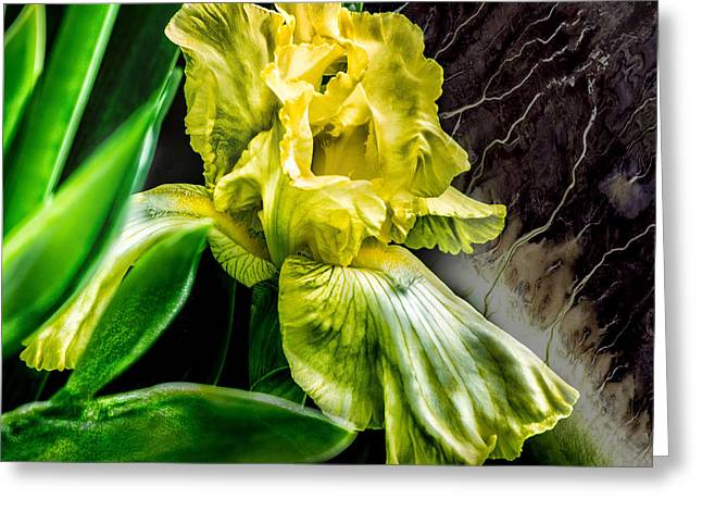 Iris In Bloom Two Greeting Card