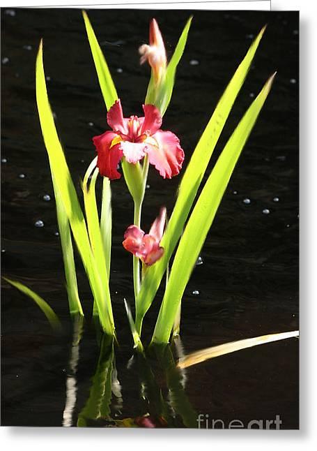 Iris In Water Greeting Card
