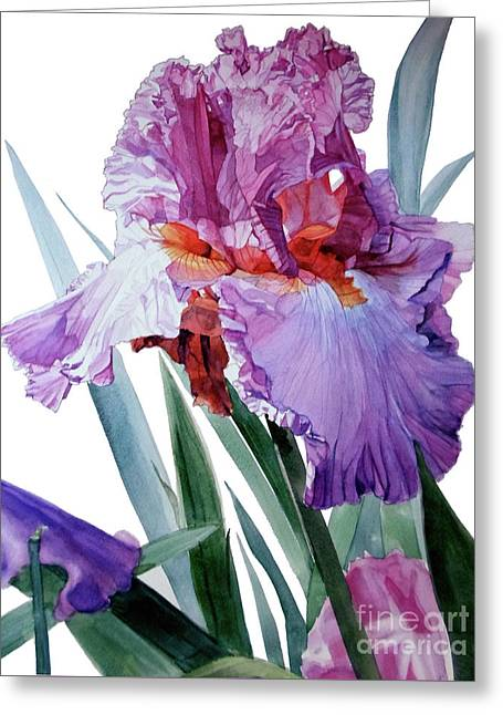 Watercolor Of A Tall Bearded Iris In Pink, Lilac And Red I Call Iris Pavarotti Greeting Card