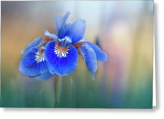 Iris Greeting Card by Magda Bognar
