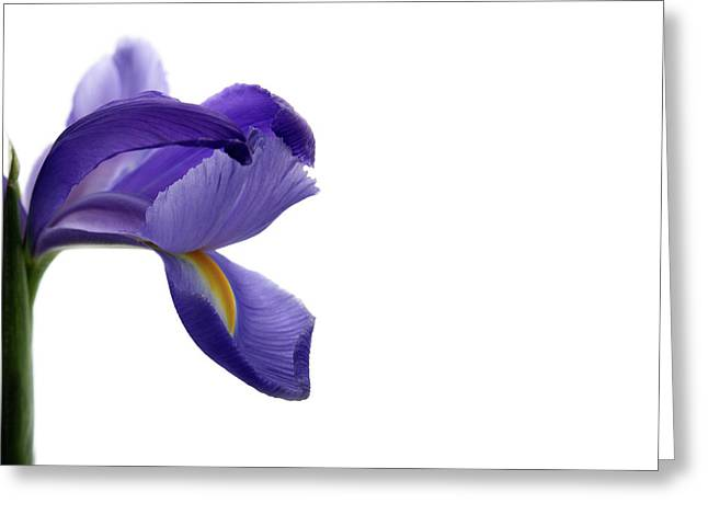Greeting Card featuring the photograph Iris by Marie Leslie