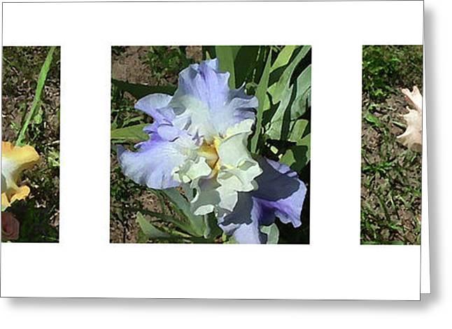 Iris Medley 1 Greeting Card