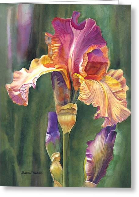 Iris On The Warm Side Greeting Card by Sharon Freeman