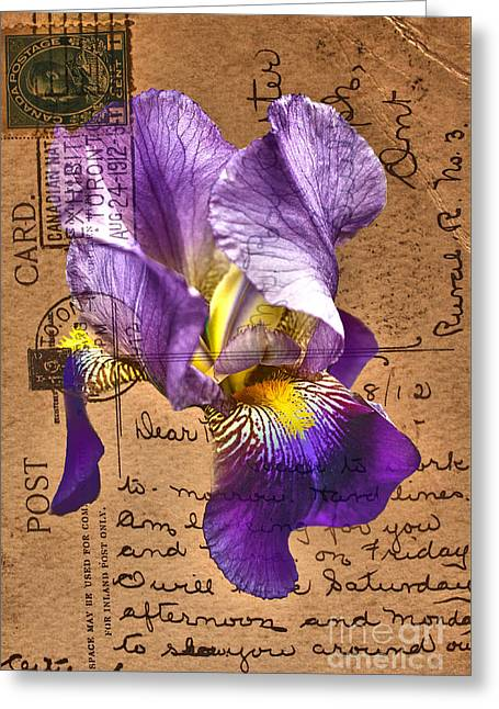 Iris On Vintage 1912 Postcard Greeting Card