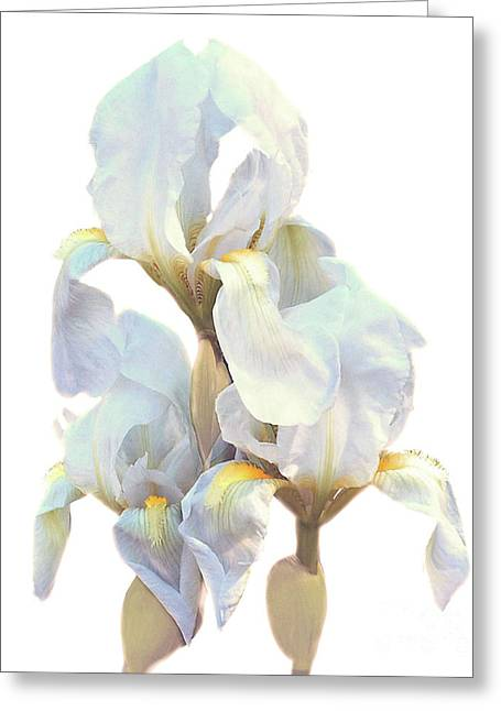 Greeting Card featuring the photograph Iris On White by Ken Frischkorn