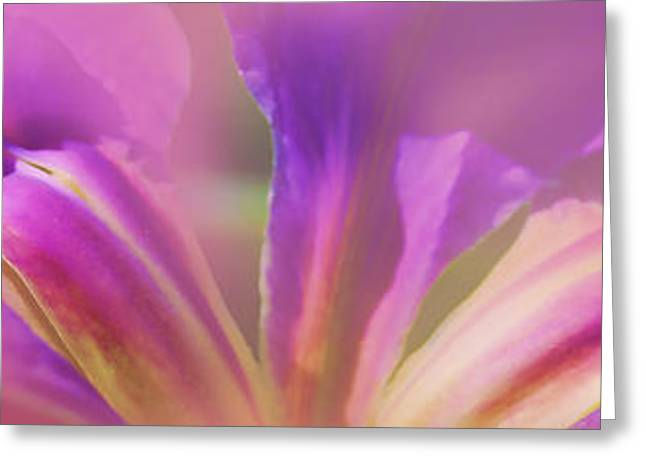 Iris Panorama Greeting Card