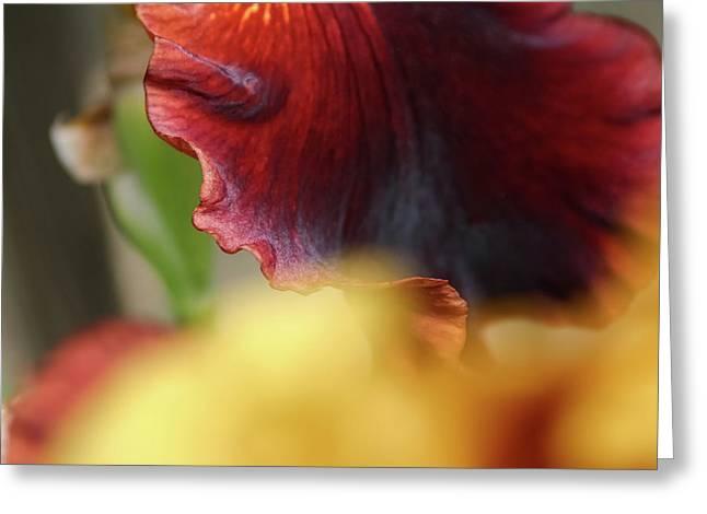 Iris Petals 2 -  Greeting Card