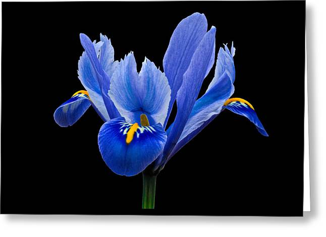 Greeting Card featuring the photograph Iris Reticulata, Black Background by Paul Gulliver