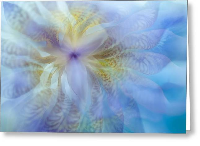 Iris Rhapsody. Blue Greeting Card