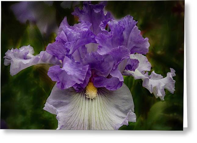 Greeting Card featuring the photograph Iris Standout by Jean Noren