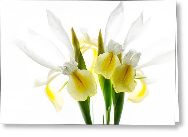 Iris Trio Black And White Greeting Card