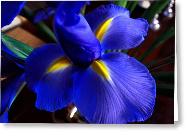 Iris Unfolding Greeting Card by Paul Cutright