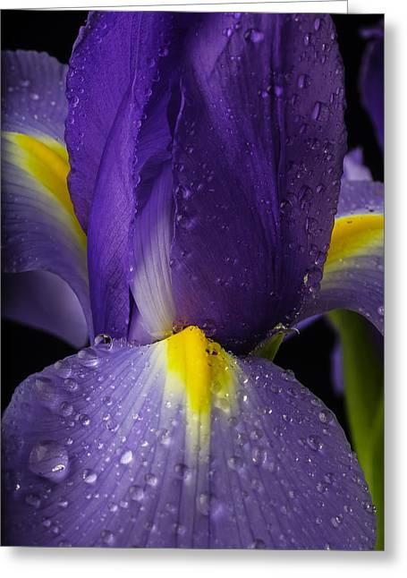 Iris With Dew Greeting Card by Garry Gay