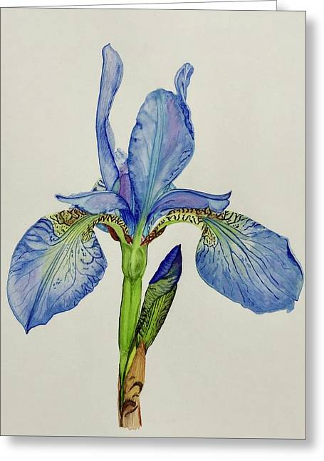Iris You Were Here Greeting Card