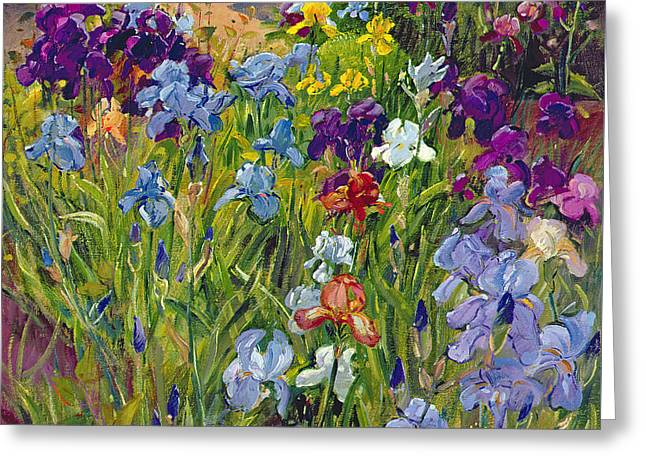 Irises And Summer House Shadows Greeting Card