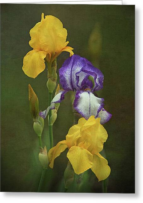 Irises Greeting Card by Angie Vogel
