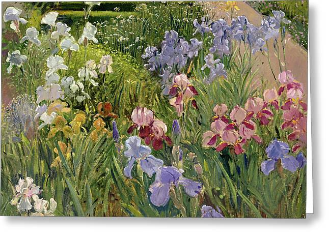 Irises At Bedfield Greeting Card