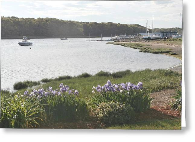 Irises By The Bay Greeting Card