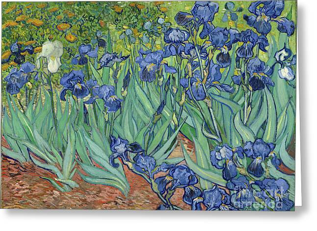 Irises By Vincent Van Gogh Greeting Card