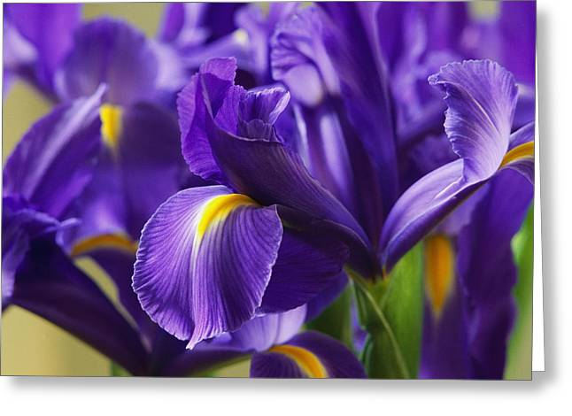 Irises, Close View, California Greeting Card by Marc Moritsch