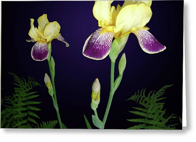 Irises In The Night Garden Greeting Card by Tara Hutton