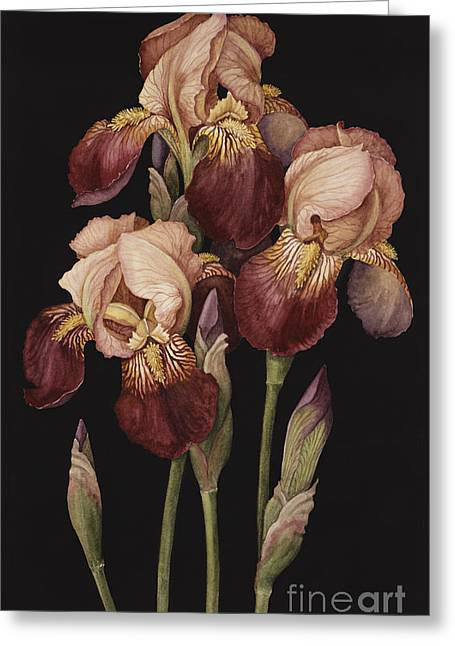 Irises Greeting Card by Jenny Barron