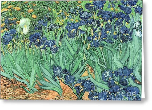 Flower Garden Greeting Cards - Irises Greeting Card by Vincent Van Gogh