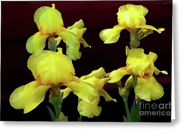 Greeting Card featuring the photograph Irises Yellow by Jasna Dragun