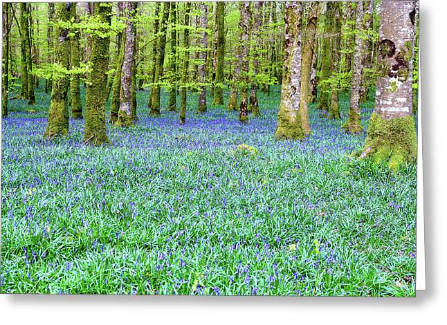 Irish Bluebell Woods - Lissadell, Sligo - New Leaves On The Trees And With A Carpet Of Blue Under Greeting Card