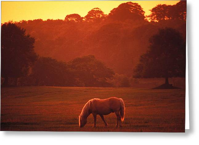 Irish Horse In Gloaming Greeting Card by Carl Purcell