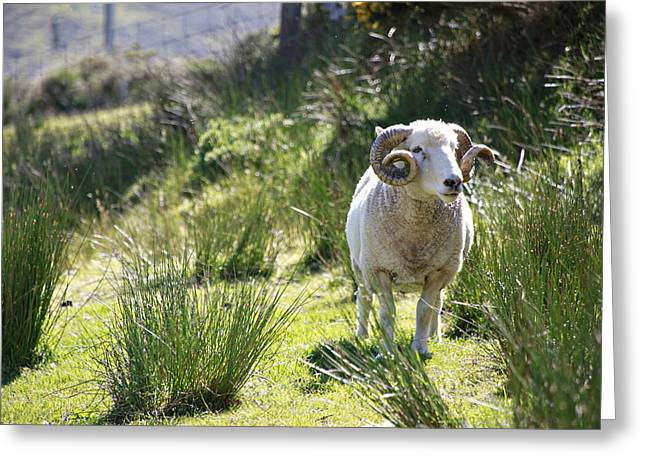 Irish Ram Greeting Card by Charrie Shockey