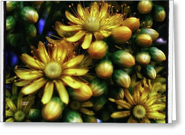 Greeting Card featuring the photograph Irish Rose. Also Known As Pinwheel by Mr Photojimsf
